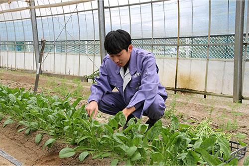 就労継続支援B型「野菜の栽培」