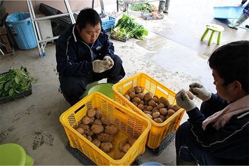 就労継続支援B型「野菜の収穫」